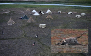 Yamal anthrax plague